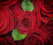 Backgroud de las rosas Fotos de archivo libres de regalías