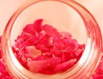 Backgroud met rozenbloemblaadjes royalty-vrije stock foto's