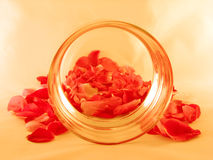 Backgroud met rozenbloemblaadjes stock afbeelding