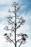 Backgroud mort de ciel bleu de petit morceau d'arbre Image libre de droits