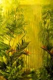Backgroud tropical magique de jungle Image libre de droits