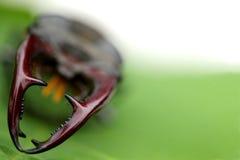backgroun ścigi wojownika zieleni liść możny jeleń obraz stock