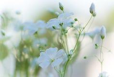 美丽的新鲜的白花,抽象梦想的花卉backgroun 免版税库存照片