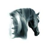 Черный аравийский крупный план портрета жеребца против backgroun пустыни Стоковые Изображения
