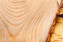 Backgroun de madera del abedul Foto de archivo