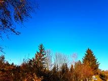 Backgroun de nature de vert de ciel bleu d'arbres Images libres de droits