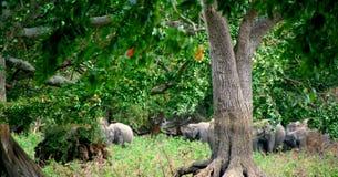 Backgroun der wild lebenden Tiere Lizenzfreies Stockfoto
