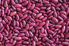 Backgroun vermelho do feijão-roxo Fotografia de Stock