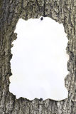 Background. The singed sheet of paper fixed on a tree Royalty Free Stock Photos
