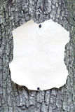 Background. Old sheet of paper attached on a tree Royalty Free Stock Images