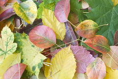Background. From autumn leaves of different colours Stock Photos