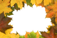 Background. Frame built from the autumn leaves of different colors Royalty Free Stock Images