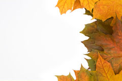 Background. Frame built from the autumn leaves of different colors Royalty Free Stock Image