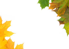 Background. Frame built from the autumn leaves of different colors Stock Photo