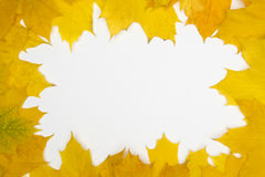 Background. Frame built from the autumn leaves of yellow color Stock Images