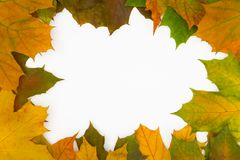 Background. Frame built from the autumn leaves of different colors Stock Image