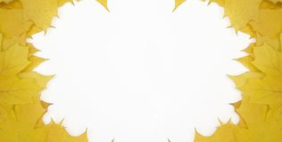 Background. Frame laid out from yellow leaves on a white background Royalty Free Stock Images