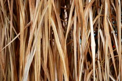 Background. Winter background of brown grasses stock images