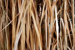 Background. Of dry grass,  horizontally framed picture stock photo