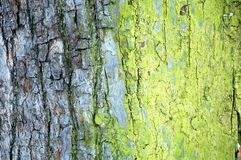 Background. Of tree bark, horizontally framed shot royalty free stock photo