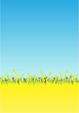 Background. Blue  cornflowers in a wheat field. The  file is in AI-EPS8 format Royalty Free Stock Photos
