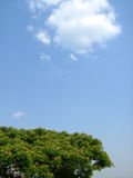 Background. Cloud over a tree top Stock Photography
