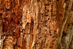 Background. Close up view displaying the detailed textures of a decaying tree Royalty Free Stock Image