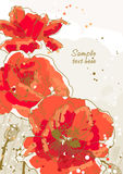 Background with 3 flower of poppy. Three beautiful red poppy on textured background Royalty Free Stock Images