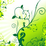 Background. Floral illustration on the green background Stock Images
