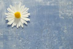 Background. Photo of a Paper Flower on a Paper Background - Background / Texture Royalty Free Stock Image