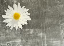 Background. Photo of a Paper Flower on a Paper Background - Background / Texture Stock Photo
