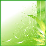 Background. It is an image of the background Royalty Free Stock Photos