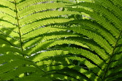Background with abstract motif of fern, greenery Stock Photo