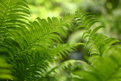 Background with abstract motif of fern, greenery Stock Photos