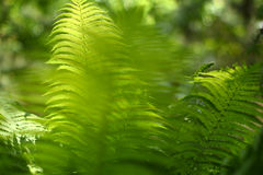Background with abstract motif of fern, greenery Royalty Free Stock Photos