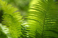 Background with abstract motif of fern, greenery Royalty Free Stock Image