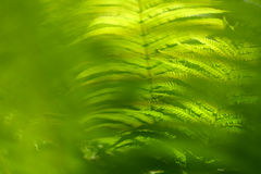 Background with abstract motif of fern, greenery Stock Photography