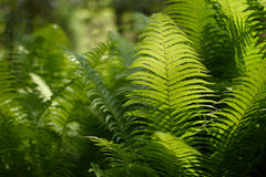 Background with abstract motif of fern. A series of abstract photos of ferns. Some are completely blurred with only a small bit of sharp. Other pictures in the Stock Image
