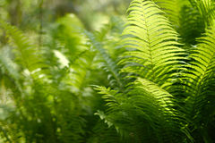 Background with abstract motif of fern. A series of abstract photos of ferns. Some are completely blurred with only a small bit of sharp. Other pictures in the Stock Photography