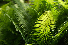 Background with abstract motif of fern, greenery Stock Image