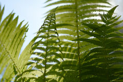 Background with abstract motif of fern, greenery Royalty Free Stock Photography