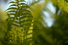 Background with abstract motif of fern, greenery Stock Images