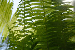 Background with abstract motif of fern, greenery Royalty Free Stock Photo