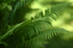 Background with abstract motif of fern. A series of abstract photos of ferns. Some are completely blurred with only a small bit of sharp. Other pictures in the Stock Photos