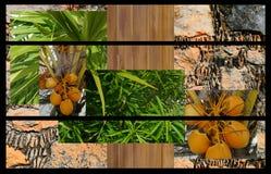 Background Abstract nature plants Wood Stone plakat Stock Photo