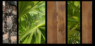 Background Abstract nature plants Wood Stone plakat Stock Photo