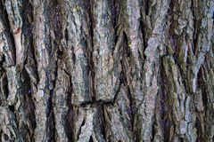 Background abstraction texture bark of old tree Stock Images