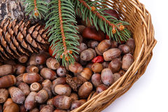 Background with acorns and cones fall decoration Royalty Free Stock Image