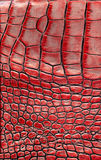 Background alligator skin Royalty Free Stock Photography