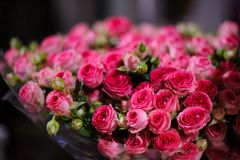 Background of a amazingly beautiful crimson pink roses Royalty Free Stock Image